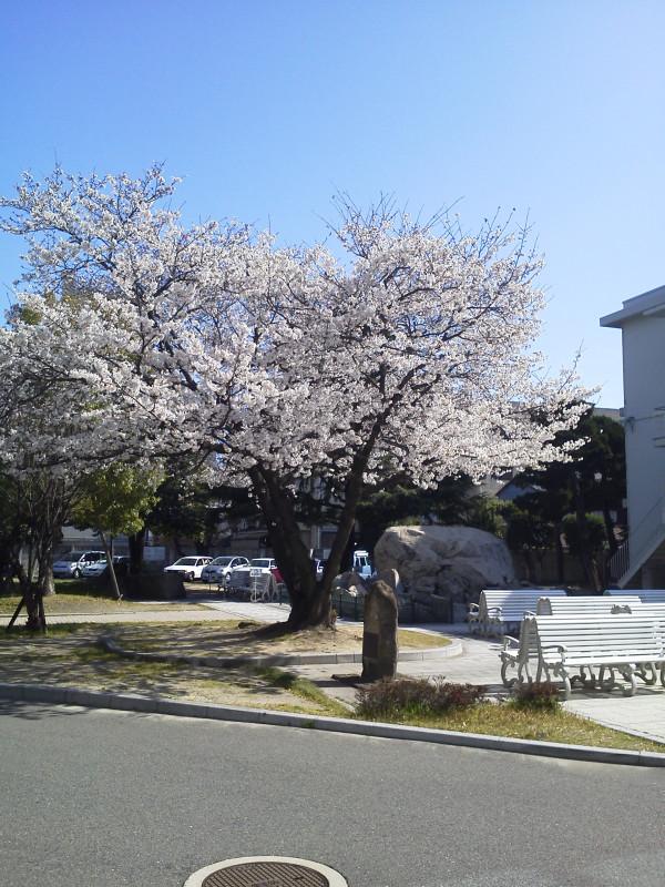 f:id:kimotokanata:20200306003012j:plain