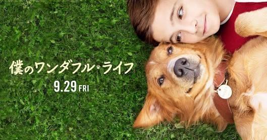 f:id:kimuchijiaozi:20171002205314j:image