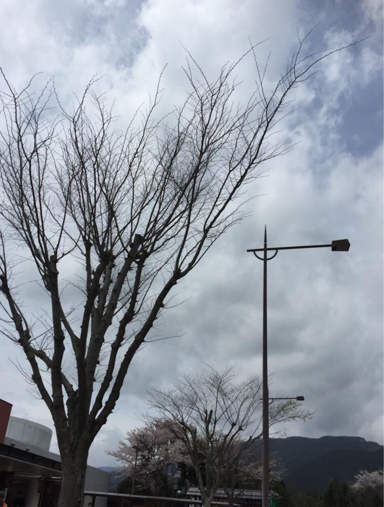f:id:kinako-shifuku:20170409154334j:image