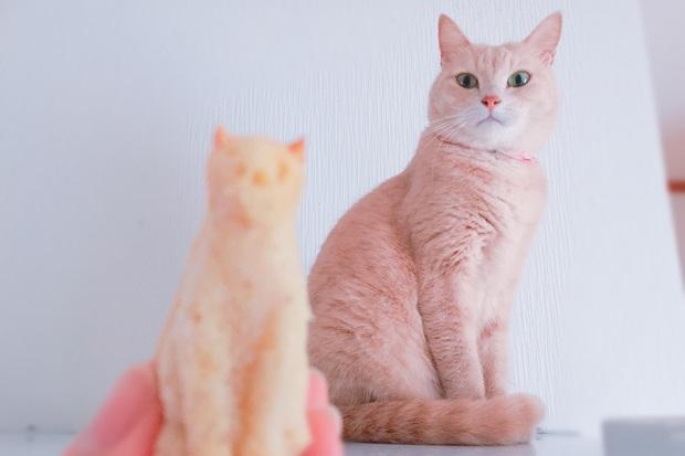 猫とバナナヨーグルトパンケーキ画像