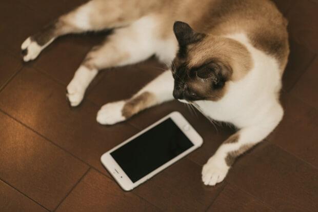 猫とスマホの画像