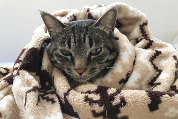 寄付された毛布と猫