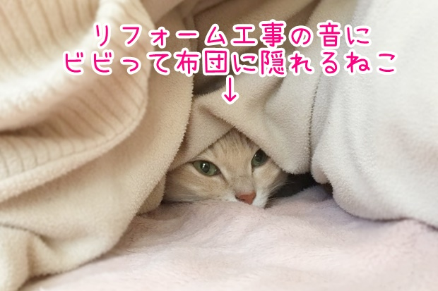 リフォーム中の猫
