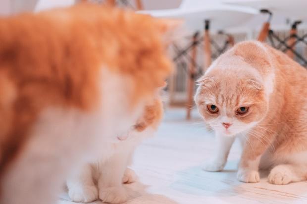 面接を受ける猫の画像