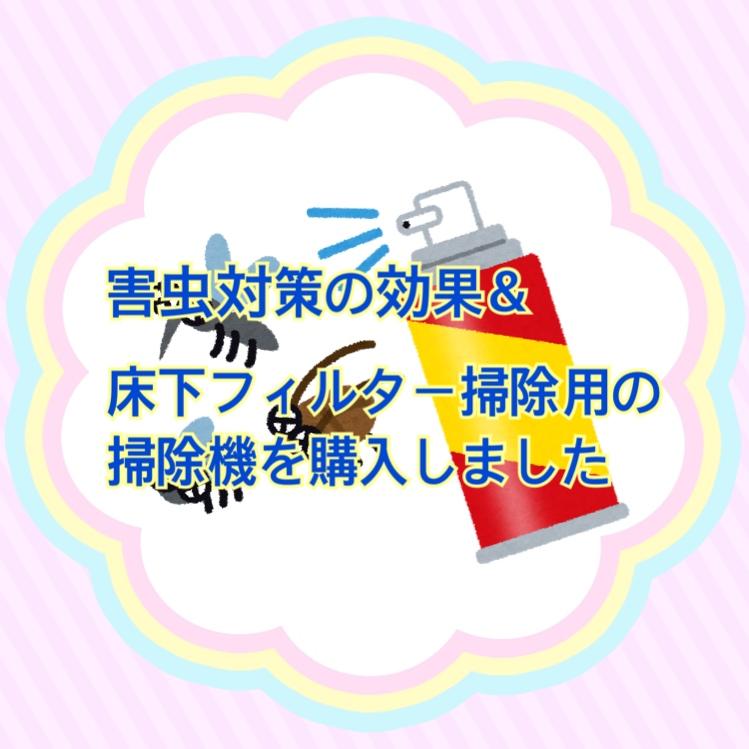f:id:kinako_0128:20210703204514j:plain