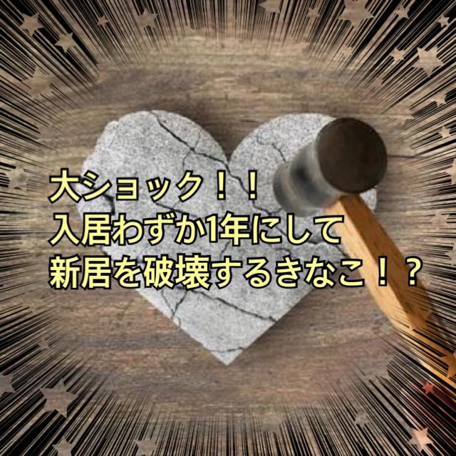 f:id:kinako_0128:20210826225020j:plain