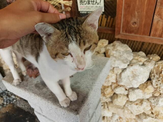 f:id:kinako_yuta:20160904143949j:image