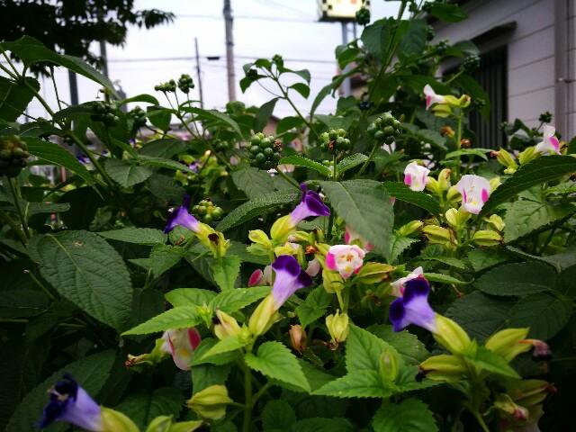 f:id:kinako_yuta:20160920090801j:image