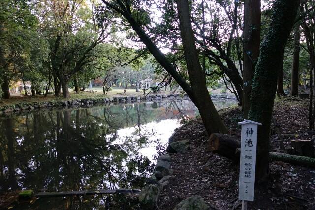 f:id:kinako_yuta:20161225154630j:image