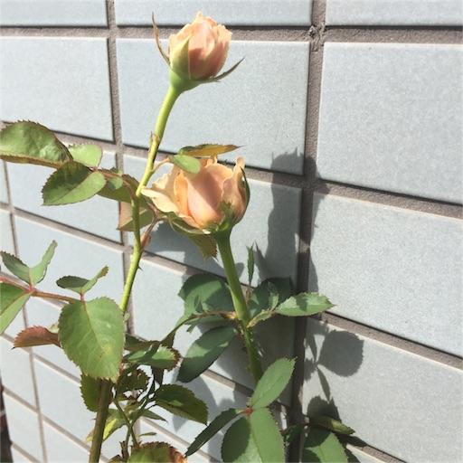 f:id:kinakobun:20180708182312j:image