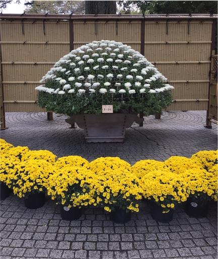 f:id:kinakobun:20181103164747j:image