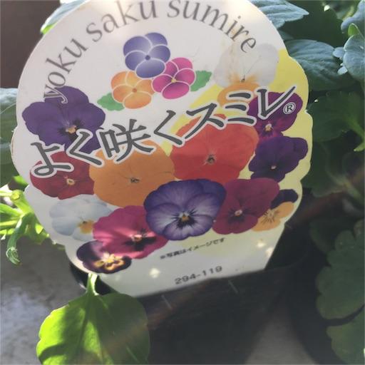f:id:kinakobun:20181123120005j:image