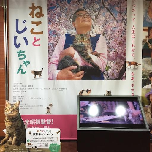 f:id:kinakobun:20190301200815j:image