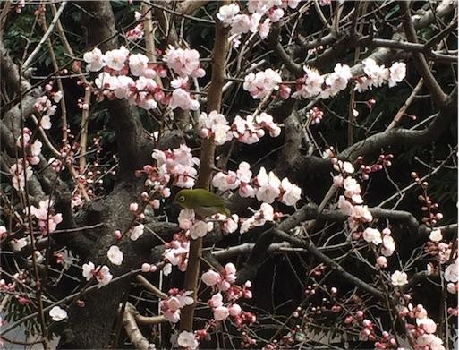 f:id:kinakobun:20190316153225j:image