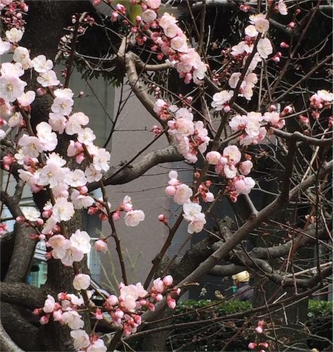 f:id:kinakobun:20190316153650j:image