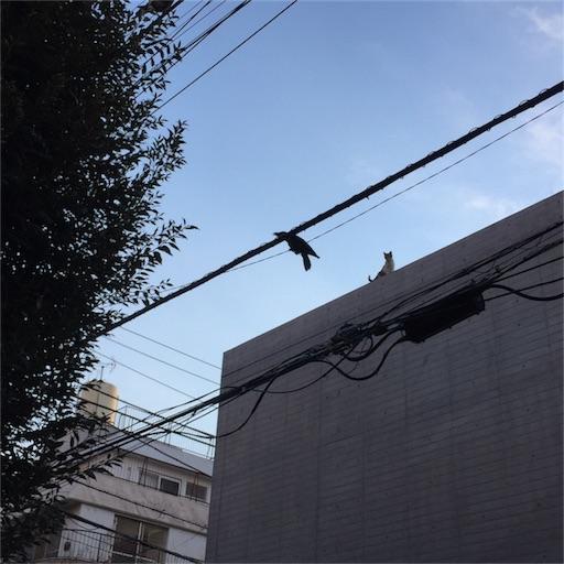 f:id:kinakobun:20190317214340j:image
