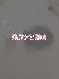 f:id:kinakomamemamama:20180823085301j:plain