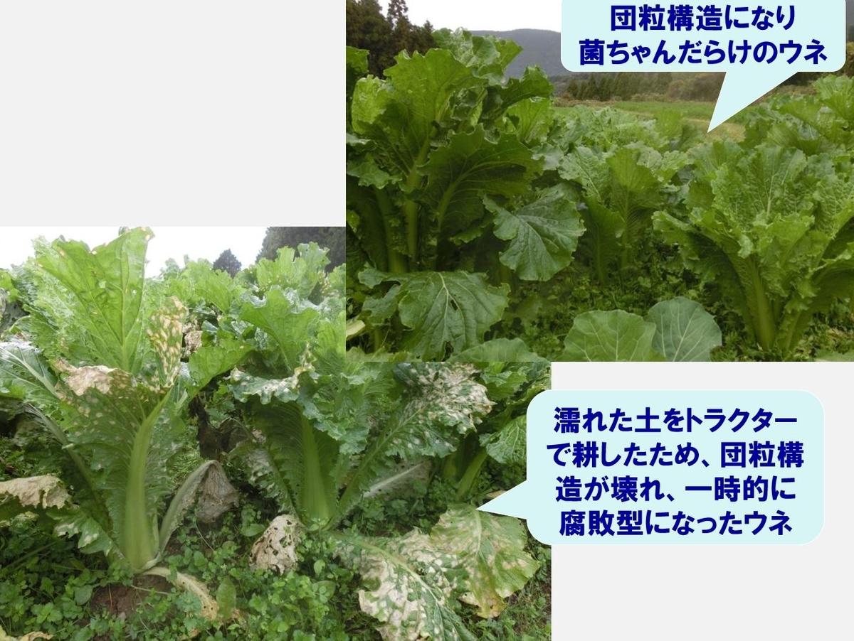 f:id:kinchanfarm:20200313235409j:plain