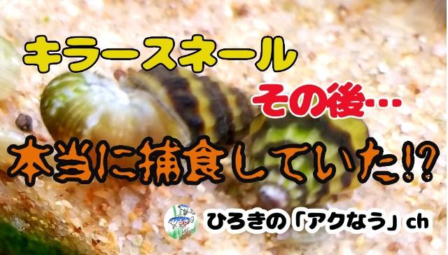 f:id:kinghiro390:20190326184355j:image