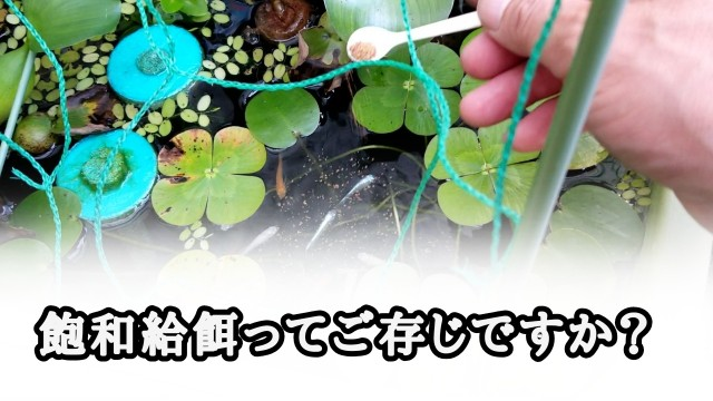 f:id:kinghiro390:20190726233259j:image