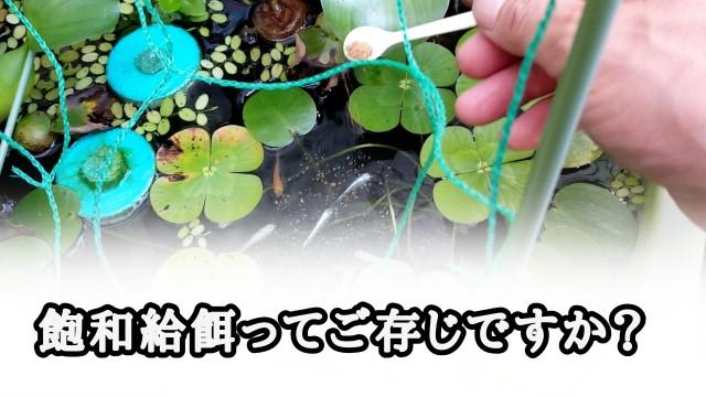 f:id:kinghiro390:20190807164450j:image