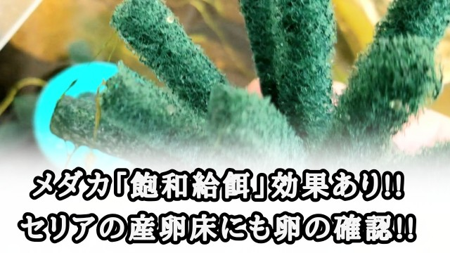 f:id:kinghiro390:20190807173018j:image