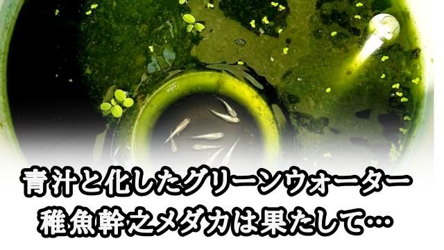 f:id:kinghiro390:20191003174344j:image