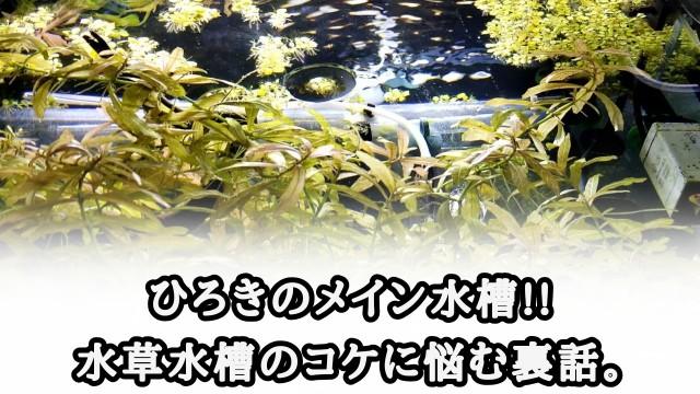 f:id:kinghiro390:20191012203931j:image
