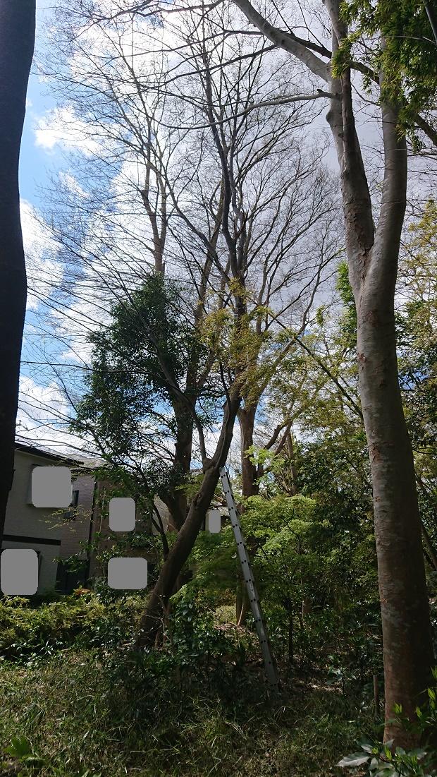 f:id:kinoboriyoshi:20190411204241j:plain
