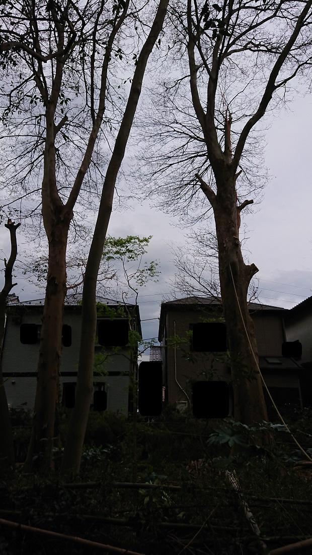f:id:kinoboriyoshi:20190411212156j:plain