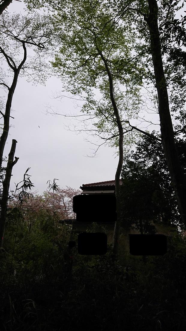 f:id:kinoboriyoshi:20190416204534j:plain