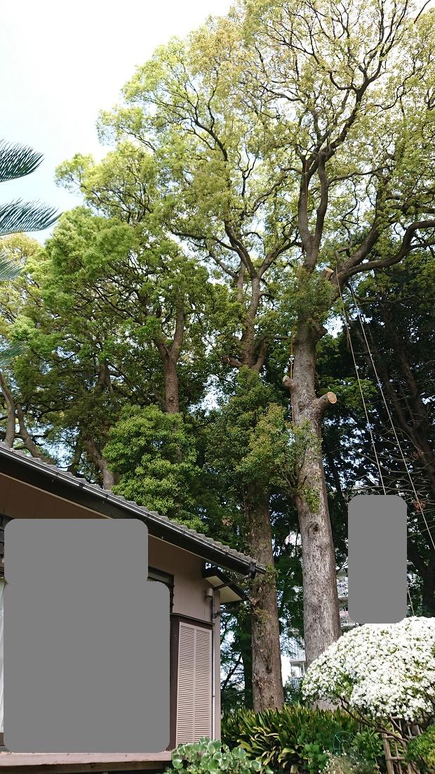 f:id:kinoboriyoshi:20190422210134j:plain