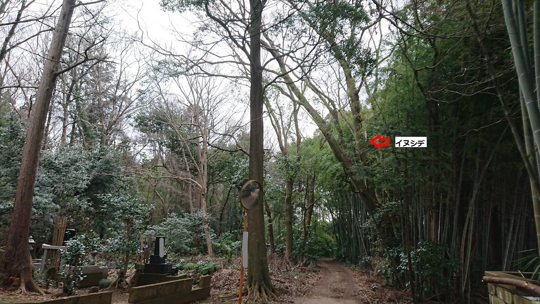 f:id:kinoboriyoshi:20200203200703j:plain