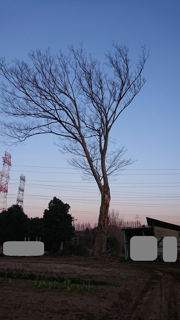 f:id:kinoboriyoshi:20200211211441j:plain