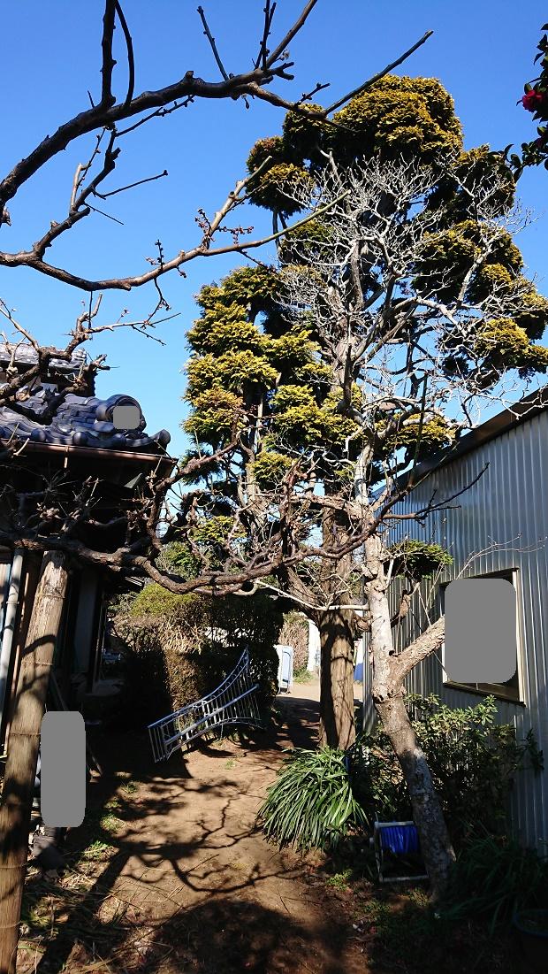 f:id:kinoboriyoshi:20200211212614j:plain