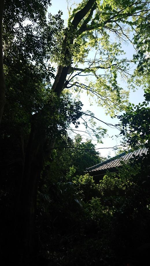 f:id:kinoboriyoshi:20200507234342j:plain