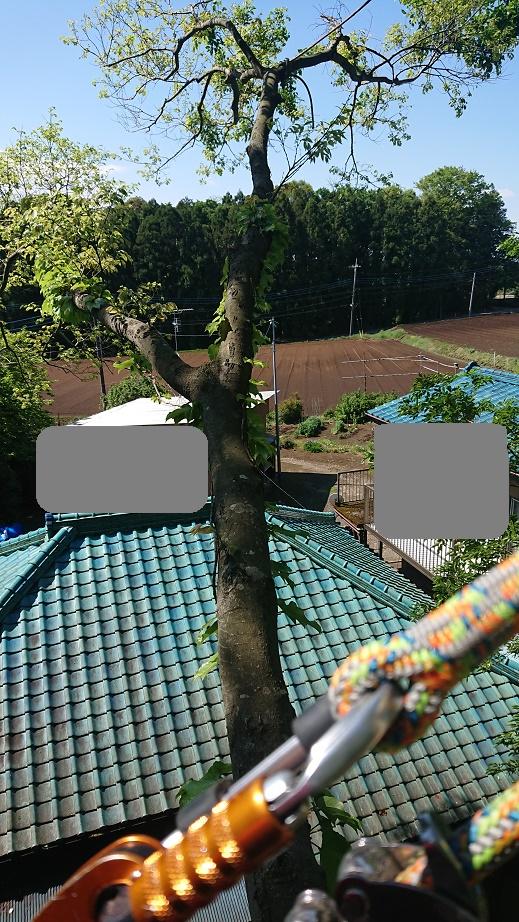 f:id:kinoboriyoshi:20200507234717j:plain