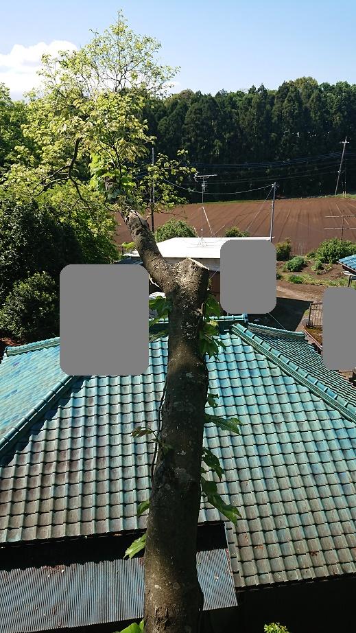 f:id:kinoboriyoshi:20200507234913j:plain
