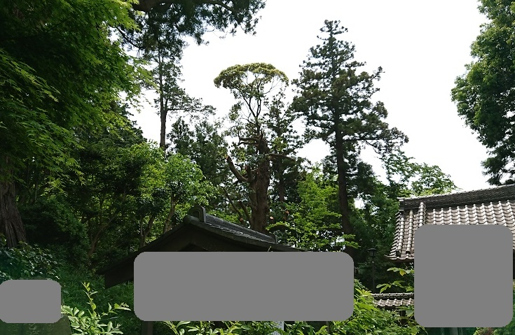 f:id:kinoboriyoshi:20200515221054j:plain