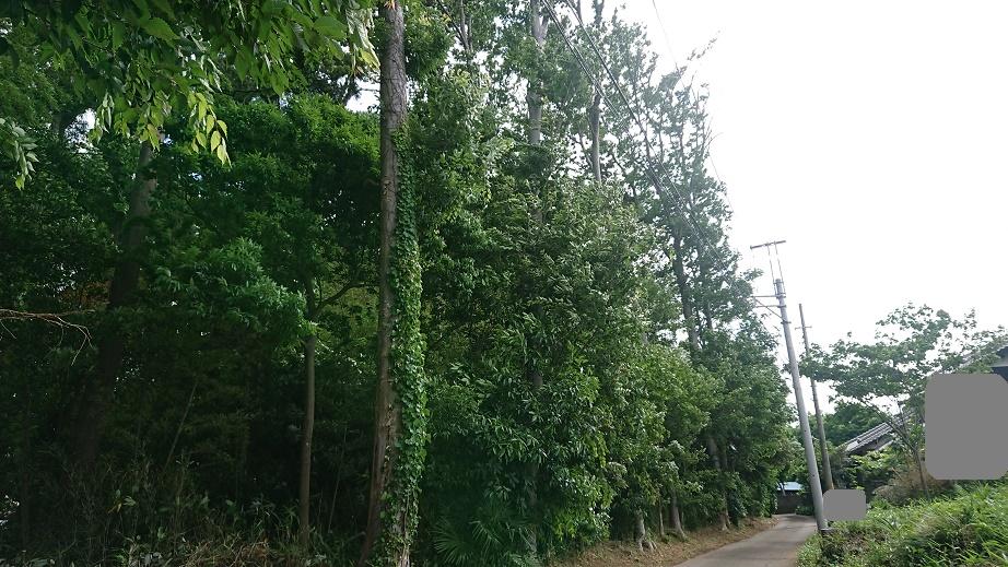 f:id:kinoboriyoshi:20200612224938j:plain