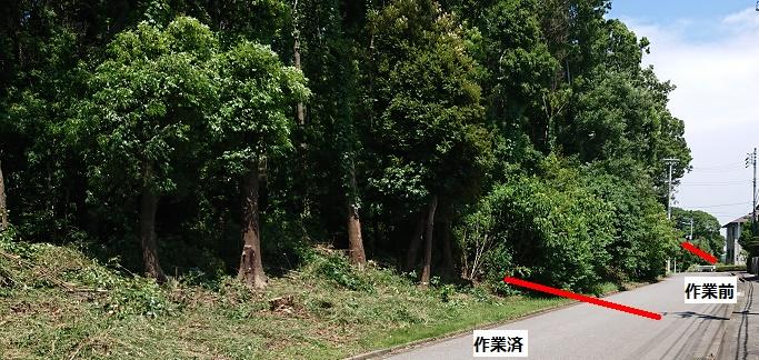 f:id:kinoboriyoshi:20200628224124j:plain