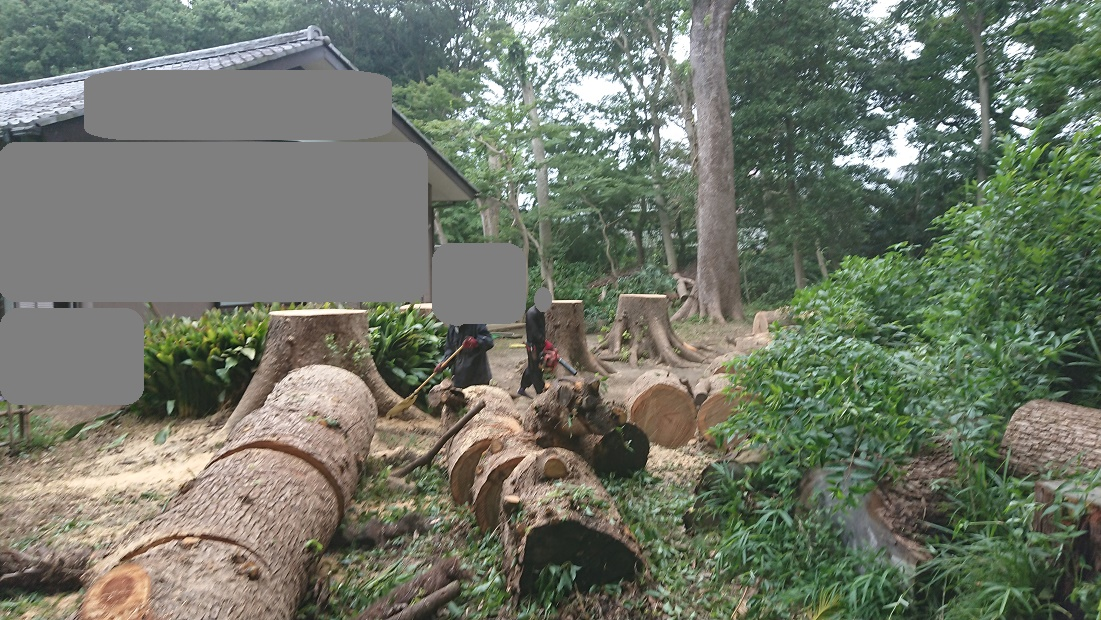 f:id:kinoboriyoshi:20200801215021j:plain