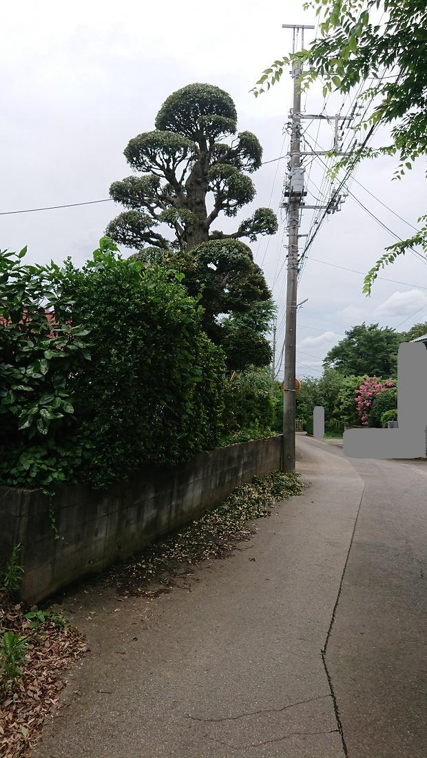 f:id:kinoboriyoshi:20200801220038j:plain