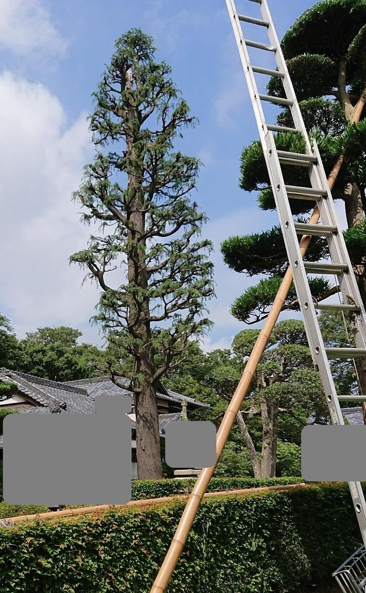 f:id:kinoboriyoshi:20200801223510j:plain