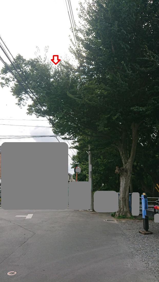 f:id:kinoboriyoshi:20200918001228j:plain