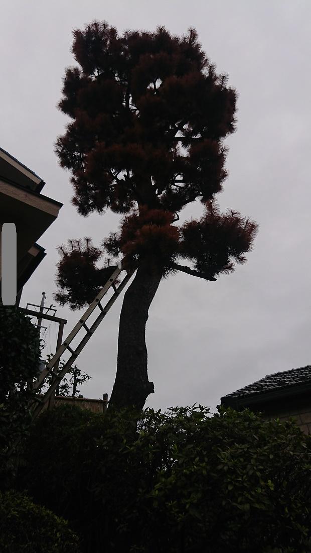 f:id:kinoboriyoshi:20200929214820j:plain