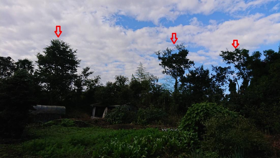 f:id:kinoboriyoshi:20201026212740j:plain