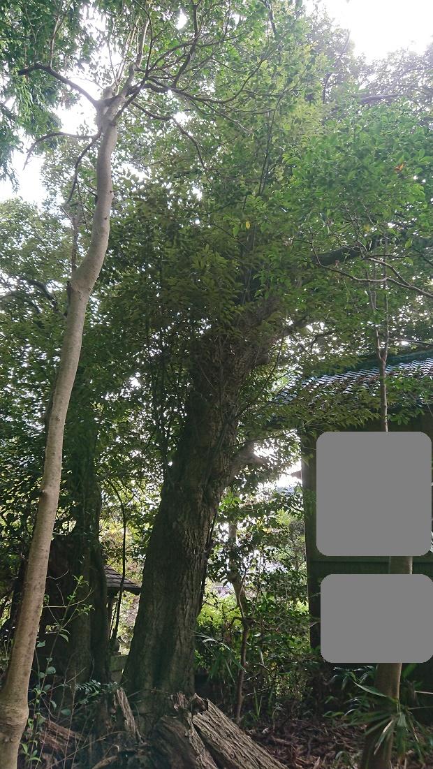 f:id:kinoboriyoshi:20201106205015j:plain