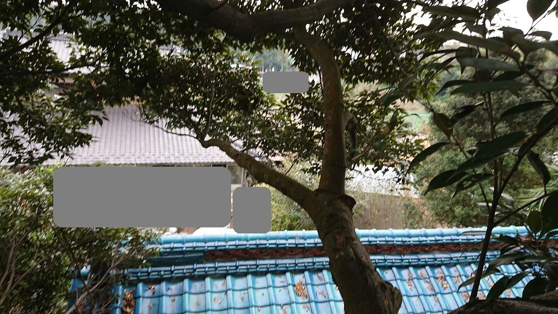 f:id:kinoboriyoshi:20201106210423j:plain
