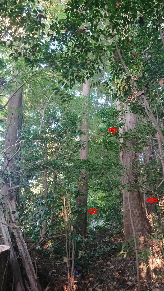 f:id:kinoboriyoshi:20201110205849j:plain